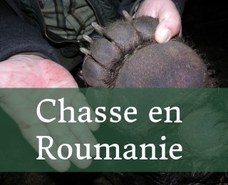 Polowania w rumunii - cover-FR